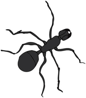 single black ant