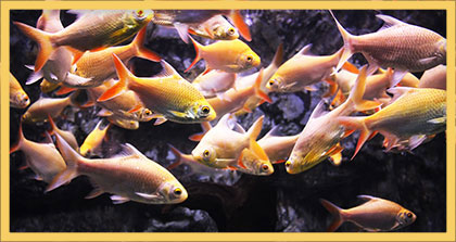 school of fish picture